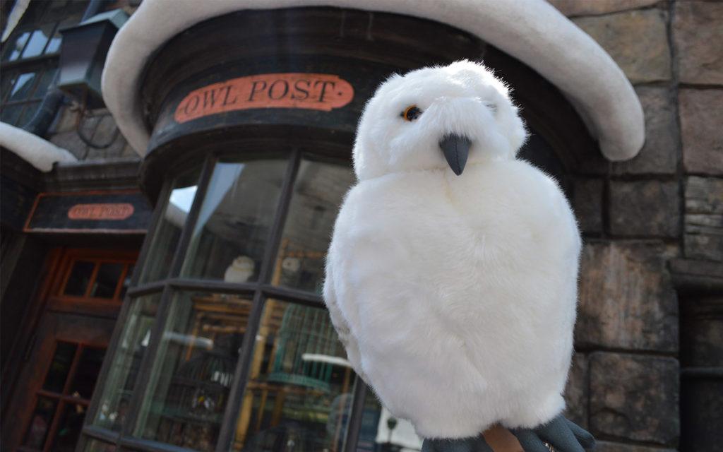 owl-post-2